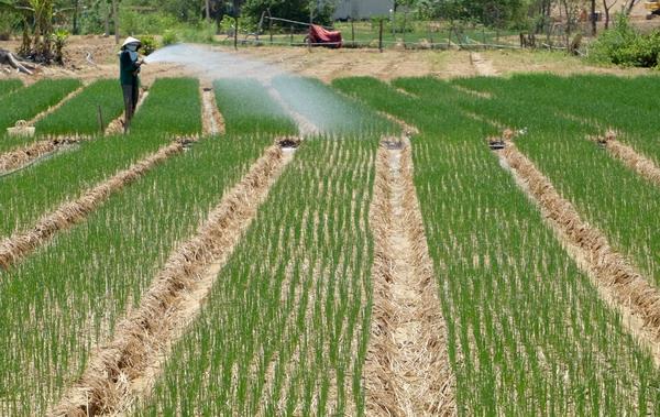 Bình Định: Phát triển du lịch nông nghiệp - Đánh thức tiềm năng, tạo sản phẩm mới