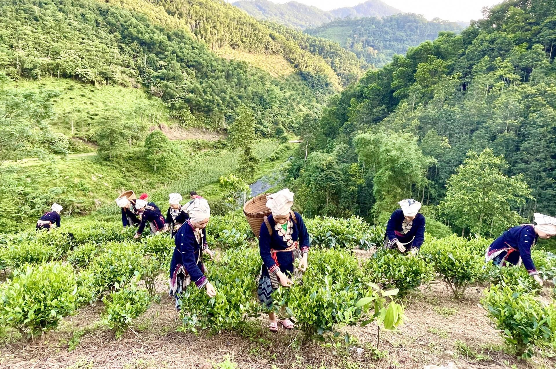 Bắc Kạn phát triển du lịch nông nghiệp, nông thôn