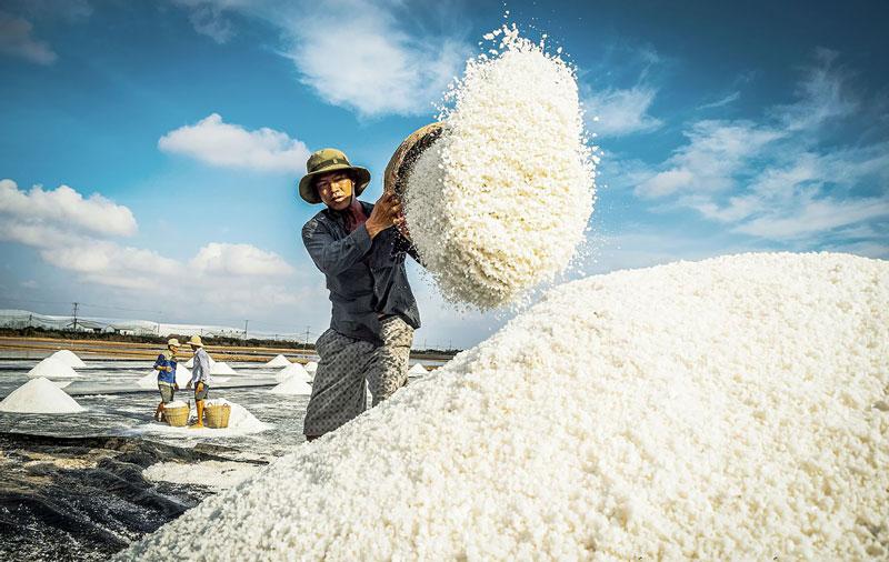 Bạc Liêu: ''Thủ phủ'' nghề làm muối Việt Nam
