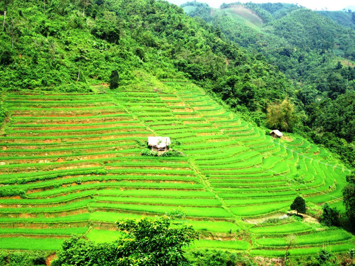 Lào Cai: Vẻ đẹp ruộng bậc thang Tân Tiến