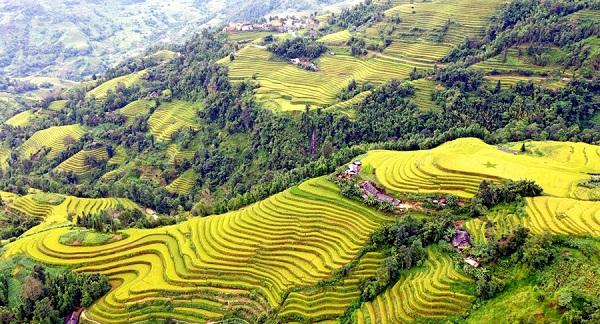 Hà Giang: Những bậc thang vàng Hoàng Su Phì