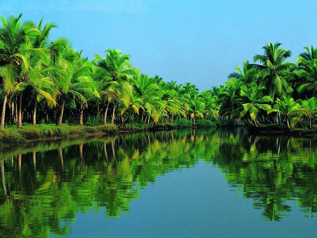 Nét đẹp cây dừa Bến Tre - www.dulichvn.org.vn