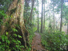 Đến rừng Cúc Phương khám phá động Người Xưa