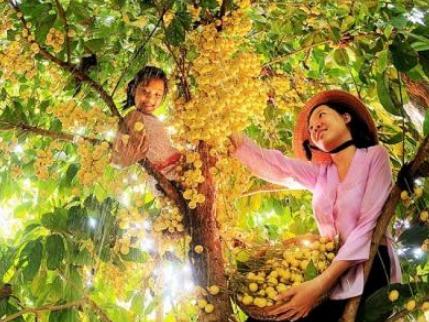 Phong Điền - Điểm sáng du lịch sinh thái của Cần Thơ