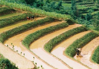 Thưởng ngoạn phong cảnh Tả Van Chư, Lào Cai